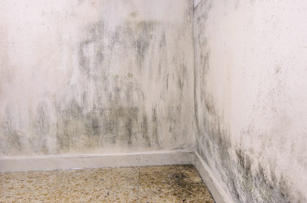 Mold problems in the house